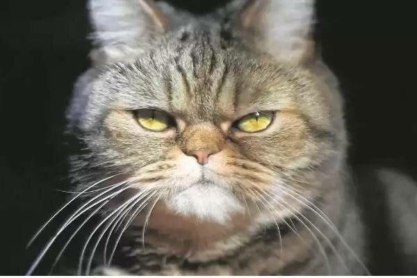 Kocie znaki futrzaków. Na te zachowania trzeba zwrócić szczególną uwagę