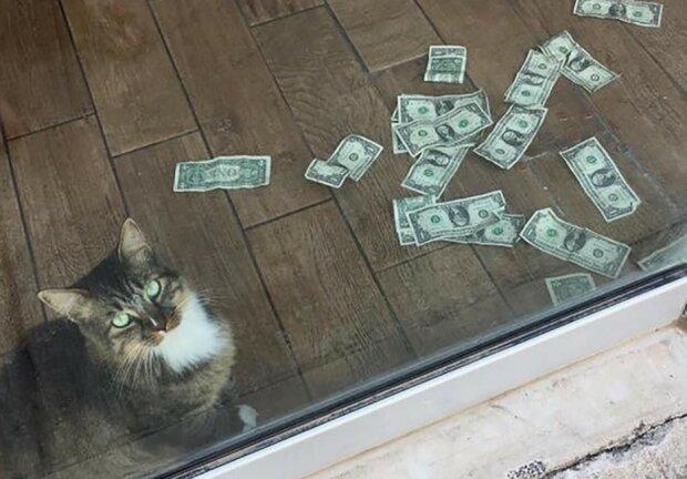 Przedsiębiorczy kot chciał pomóc pracownikom tego biura. Zamiast łapać gryzonie, znalazł sposób na poprawę kondycji finansowej firmy