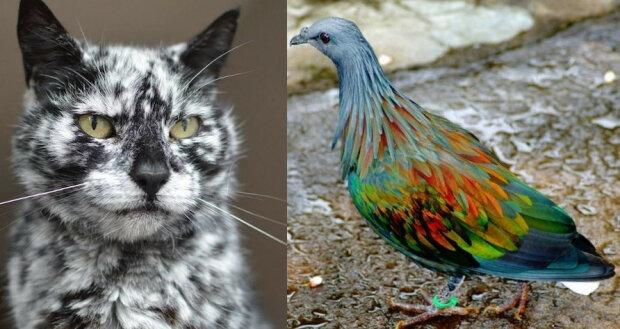 Te zwierzaki swoją wyjątkowość zawdzięczają nietypowej mutacji genów. Nie sposób nie uśmiechnąć się na ich widok