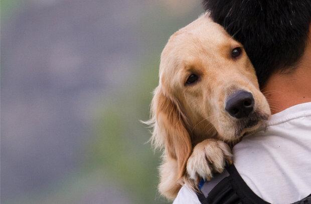 Jak bardzo dbasz o swojego czworonoga? Psie choroby mogą wpływać także na człowieka