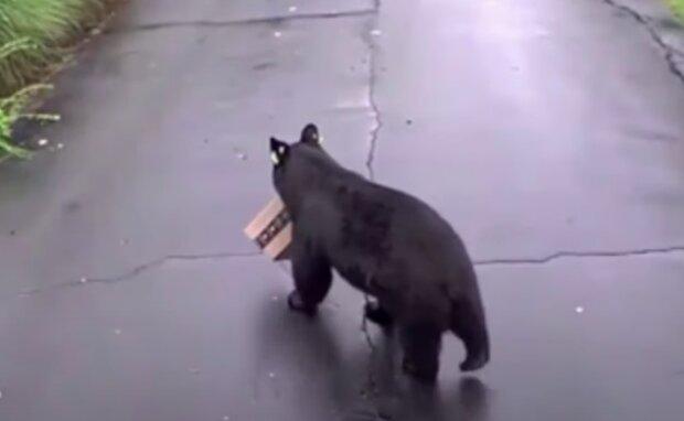 Niecodzienna kradzież! / YouTube:  News Alert