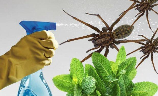 Pewna kobieta przetestowała niesamowite właściwości znanej od wieków rośliny. Rezultaty przeszły jej oczekiwania