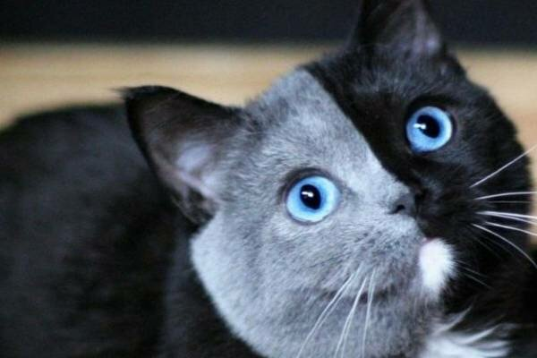 Ten kociak o podwójnym pyszczku wzrusza i bawi Internautów. Jest przeuroczy i bardzo nietypowy