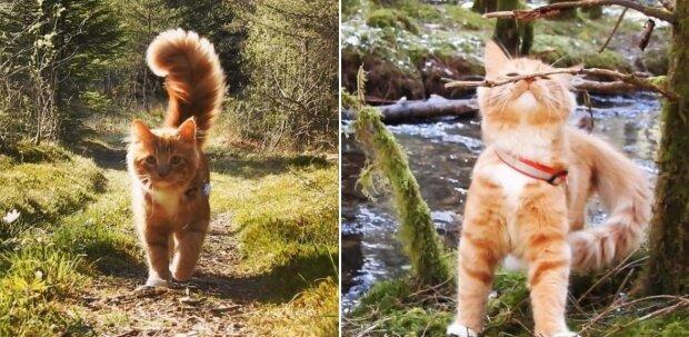 Adoptowany kotek okazał się poszukiwaczem przygód, a jego elegancki ogon po prostu trzeba zobaczyć ...