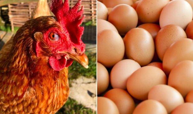 Ważna informacja dla smakoszy jajek! Zjedzenie niektórych z nich może skończyć się bardzo źle