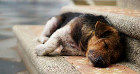 Holandia jest pierwszym krajem na świecie bez jednego bezpańskiego psa. Oto jak to zrobili
