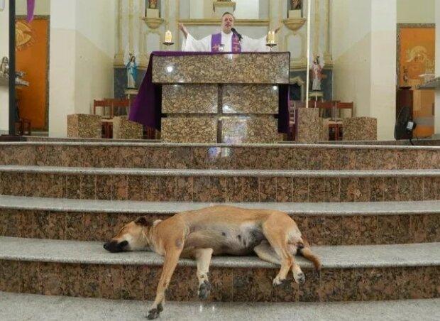 Jedna z polskich parafii wzięła przykład z brazylijskiego księdza. Wzruszająca inicjatywa proboszcza i aktywistów na rzecz zwierząt