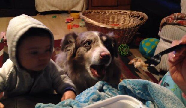 Urocze nagranie z kilkumiesięcznym dzieckiem robi furorę w Internecie. Pies okazał się bardziej pojętny od maluszka