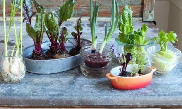 Nie warto wyrzucać do śmieci resztek warzyw i owoców. Nawet nie przypuszczamy, jakie okazy można z nich wyhodować