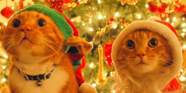 Tak można przedobrzyć z obchodami Bożego Narodzenia. Śmiechu co niemiara