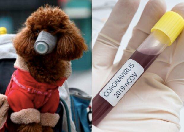 Spacery ze zwierzakami podczas pandemii
