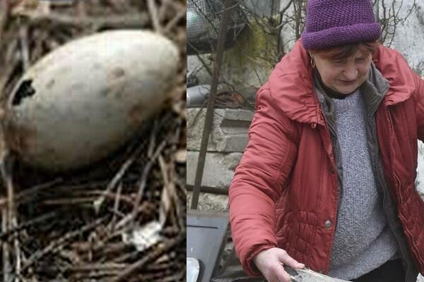 Ta kobieta podrzuciła znalezione jajo kurze. Nie mogła uwierzyć w to, co się z niego wykluło