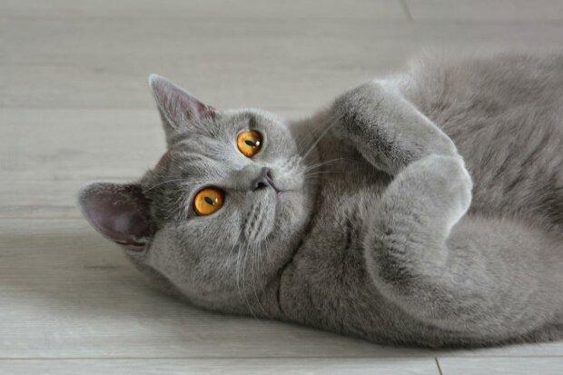 Dzisiejsza medycyna działa cuda. Ten kotek stracił wszystkie łapki, teraz jest okazem zdrowia