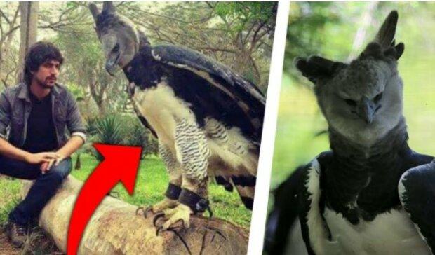 To największy drapieżny ptak na świecie. Sam jego widok robi potężne wrażenie