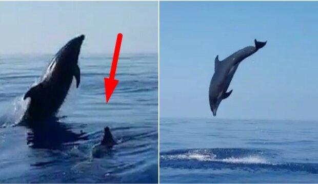 Rybacy zwolnili z sieci małego delfina. To jak podziękowała im jego matka zdziwiło wszystkich
