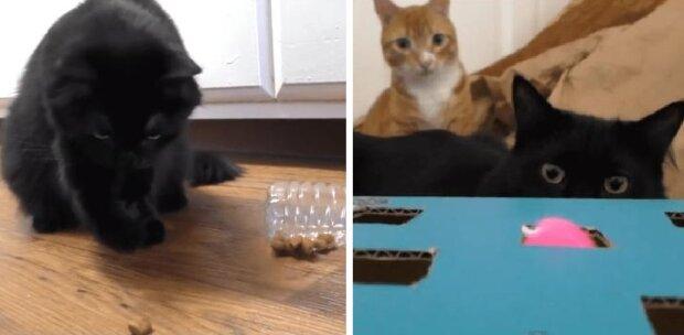 Pięć ratunków dla właścicieli kotów