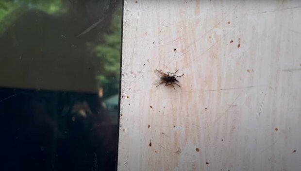 Skuteczne sposoby na muchy! / YouTube:  ZJP-TV Śmieszne Piosenki Wierszyki Filmiki PL