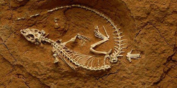 """Paleontolodzy nas ,,oszukują"""". Dzięki nim wiemy, jak wyglądają prehistoryczne jaszczurki"""