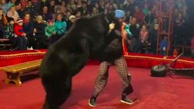 Nieoczekiwana reakcja niedźwiedzia. Widownia zamarła na widok tego, co sięstało