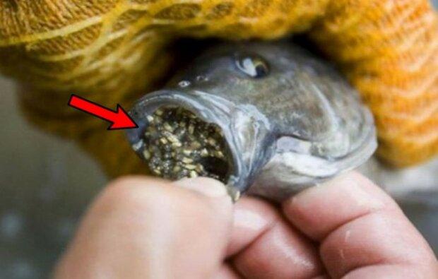 Warto uważać na kupowane na Wigilię ryby. Niektóre zawierają całą tablicę Mendelejewa