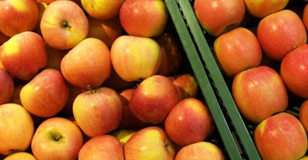 Od nowego roku ceny jabłek mogą znacznie wzrosnąć. Cieszmy się nimi dopóki możemy