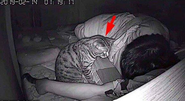Właściciel chciał dowiedzieć się, co jego zwierzak robi w nocy. Niesforny kot wprawił mężczyznę w osłupienie