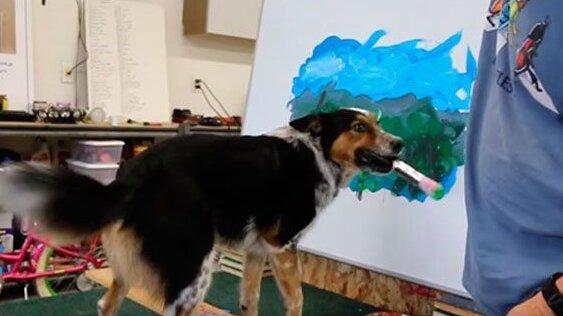 Ten pies ma niesamowity talent. Nikt nie może uwierzyć w to, co potrafi zrobić