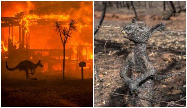 180 osób aresztowanych za celowe podpalenie lasów w Australii. Co ich czeka