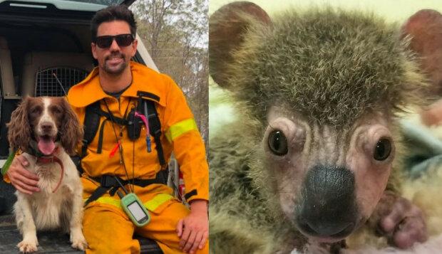 Zwierzęta ratują zwierzęta w australijskich pożarach. Heroiczna postawa psa, zasługuje na order