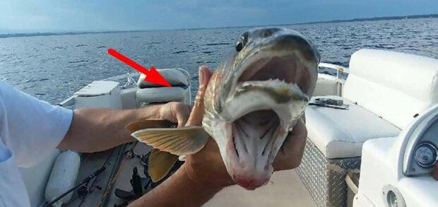 """Ryba z """"dwoma ustami"""" zaskoczyła rybaków: ″ Zapamiętam połów na całe życie ″"""