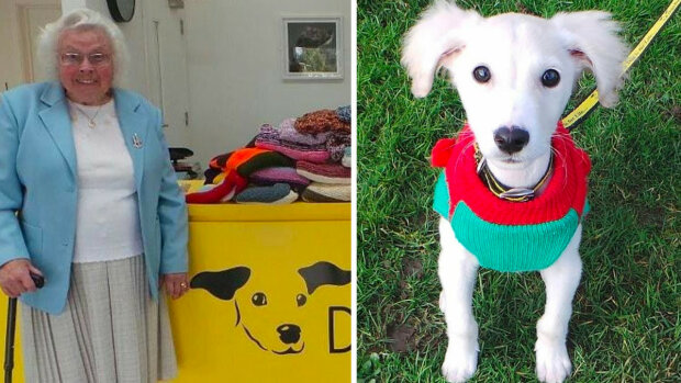 450 koców i swetrów dla psów ze schronisk. Działając w ten sposób, 89-letnia babcia pomagała zwierzętom