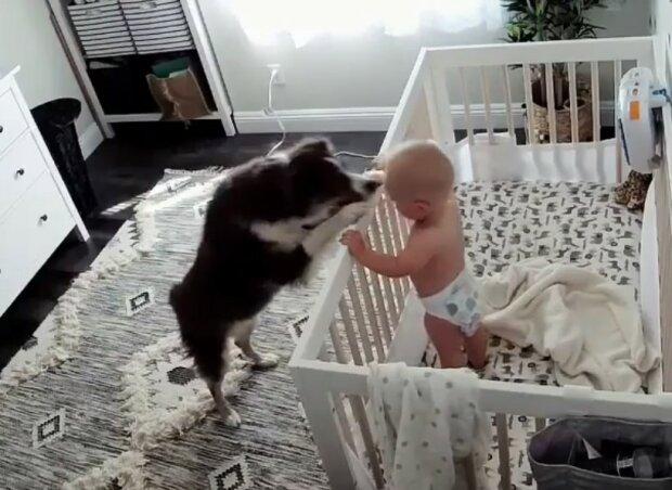 Niesamowite nagranie nietypowego zachowania psa. To, co zrobił z małym chłopcem przechodzi najśmielsze oczekiwania
