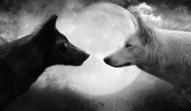 Ta stara przypowieść o dwóch wilkach powinna być dla nas wszystkich przestrogą. Mówi o tym, jakie dwie twarze ma każdy człowiek