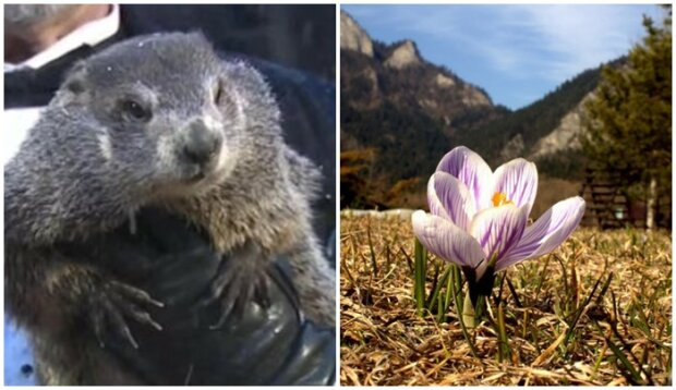 Wiadomo czy wiosna pojawi się wkrótce. To zwierzę przepowiada pogodę skuteczniej od jasnowidzów