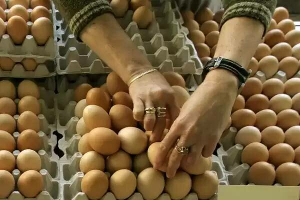 Główny Inspektor Sanitarny ostrzega przed zakażonymi jajkami. Jest wykaz wycofanych produktów