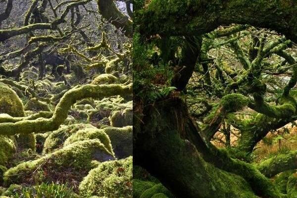 Oto las z bajki, on naprawdę istnieje! Dzieją się w nim niewiarygodne rzeczy, o których mało kto ma pojęcie