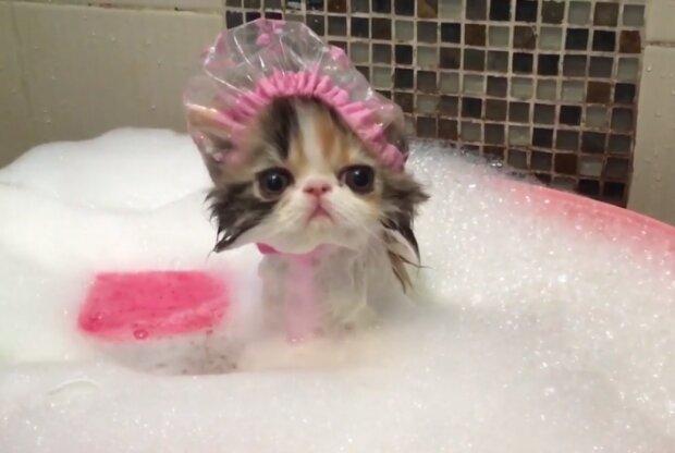 """Mały kotek bierze kąpiel. To nagranie jest zupełnie inne niż popularne """"śmieszne filmiki z kotkami"""""""